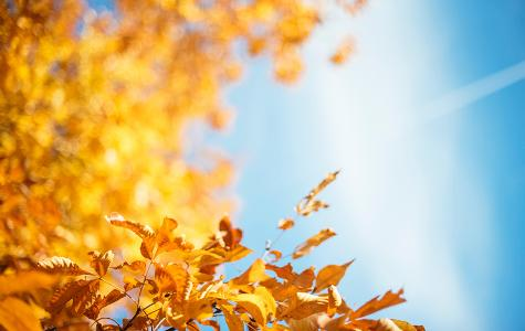 close-up of autumn leaves against a blue sky