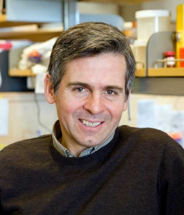 Arturo Alvarez-Buylla, PhD, UCSF Brain Tumor Center